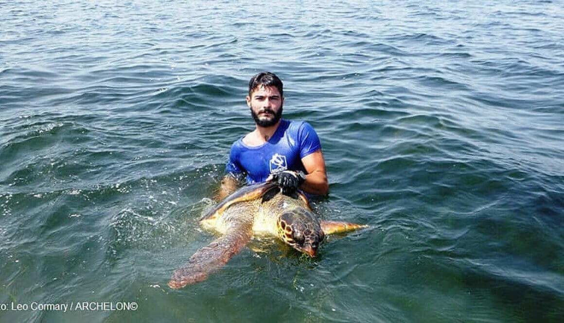 Τα-ταξίδια-των-χελωνών-του-Αμβρακικού-Κόλπου-καταγράφει-ο-ΑΡΧΕΛΩΝ-